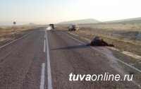 На автодорогах Тувы участились наезды на животных