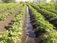 В Туве усиливают меры по развитию огородничества