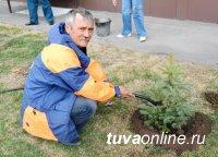Голубые ели украсят новое здание МЧС в Кызыле