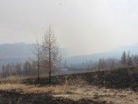 В Туве на 8 мая не зарегистрировано лесных пожаров. Население просят соблюдать противопожарный режим