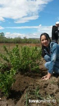 Ботанический сад Тувинского госуниверситета пополнился яблоней «Алые паруса», вишней войлочной