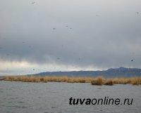 На территории озера Убсу-Нур (Тува-Монголия) выявлен птичий грипп