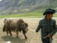 Минсельхоз Тувы объявил дополнительный прием документов для участия в конкурсе на развитие семейных животноводческих ферм на базе КФХ