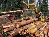 Заготовка древесины станет доступнее для малого бизнеса Тувы
