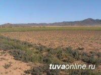 Землевладелец из Чаа-Хольского кожууна выполнил все требования предписания Управления Россельхознадзора