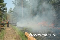 За сутки в Туве ликвидировано два, локализовано восемь лесных пожаров