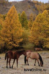 Осужден монгун-тайгинец, угнавший из Монголии пять лошадей и одного верблюда