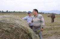 Улуг-Хемский район Тувы перевыполнил план по кормозаготовкам