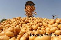 В Туве малообеспеченным семьям помогли запастись картофелем и овощами на зиму