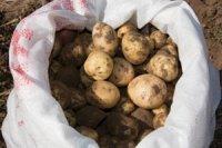 В Туве завершается сбор урожая овощей по губернаторской инициативе в поддержку малоимущих и многодетных семей