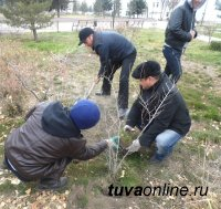 Кызыл: В сквере им. Салчака Тока появилась дополнительная зеленая изгородь