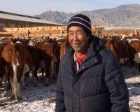В Туве СПК «Амык» становится основой для развития специализированного мясного скотоводства
