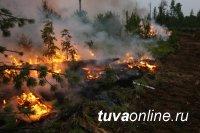 Более 90% площади лесных пожаров пришлось на Забайкальский край, Иркутскую, Амурску области, Бурятию