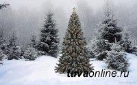 Перевозка новогодней ели разрешена только при наличии карантинного сертификата