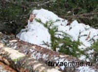 Полицейские задержали дровосека, незаконно заготовившего в тувинской тайге более 26 кубов леса