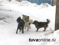 О бродячих собаках кызылчане могут сообщить в ЕДДС по телефон 23142