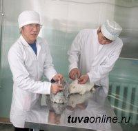 Ветеринарная клиника ТувГУ: лабораторно-практические занятия для студентов, услуги для населения