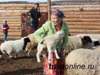 В Туве на особом контроле завершение зимовки скота, окотная кампания и защита чабанских стоянок от подтоплений