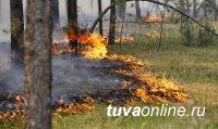 В Туве огонь, которым чабан хотел спугнуть снежного барса, перешел в лесной пожар