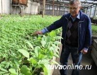 Ботанический сад Тувинского госуниверситета начинает реализацию овощной и цветочной рассады