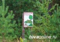 В Туве нет действующих лесных пожаров, но высокая пожарная опасность сохраняется