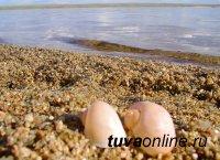 Администрация Эрзинского кожууна призывает отдыхающих на озере Торе-Холь не распивать спиртные напитки