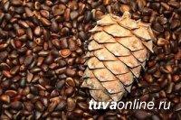Россельхознадзор: Перевозка кедровых орехов разрешена только при наличии карантинного сертификата