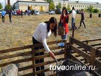 В Кызыле состоялась девятая республиканская выставка племенных овец и коз – телеканал Тува 24