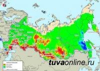 Риск возникновения лесных пожаров в Туве прогнозируют на июнь