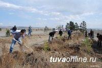 Конец апреля – начало мая в Туве будут посвящены озеленению населенных пунктов