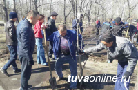 Дружная команда Почетных граждан Кызыла, депутатов, молодежи провела субботник и посадку деревьев на Молодежном сквере