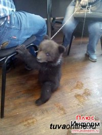 Кызыл: Дама с медведем