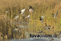 В Туве начинается очередной мониторинг по птичьему гриппу