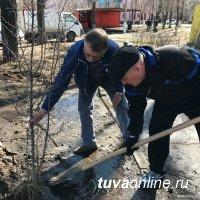 Весной в Год экологии в Туве посадили 12921  саженец!!!