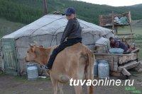 Тува: до 11 августа идет прием документов от начинающих фермеров на получение господдержки