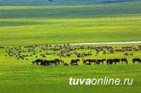 В Монголии зарегистрировано самое высокое поголовье скота