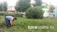 В Кызыле в борьбу с бурьяном включились предприниматели, студенты и школьники