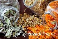 Минздрав Тувы выступает за активное возобновление и развитие традиций заготовки целебных трав