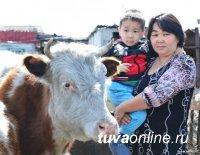 """Тува: """"Корова-кормилица"""" помогает 619 семьям"""