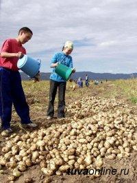 """140 тонн """"социального"""" картофеля планируют собрать семьи Тувы"""