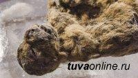 Сохранился идеально: в Якутии найдены останки детёныша древнего пещерного льва