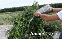 Усиление мер по уничтожению дикорастущей конопли обсудили на антинаркотической комиссии в Туве
