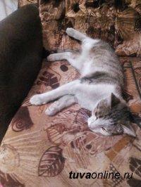 После 4-месячных скитаний в степях потерянный у озера Торе-Холь кызылский кот возвращен хозяйке