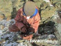 WWF усиливает борьбу с браконьерством на снежного барса в Туве