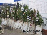 Кызыл: 1 мая на площади Арата будет организована продажа саженцев, рассад, семян