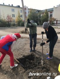 Госкомлес Тувы поможет жителям Кызыла и кожуунов в обеспечении саженцами для озеленения дворов и улиц