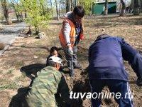 ФГУП «Минусинское» привезет 25-27 мая на ярмарку в Кызыл лучшие саженцы