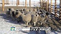 Глава Тувы поручил министру экономики обеспечить консультационное сопровождение хозяйств молодых животноводов