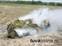 Кызыл: На дачах левого берега уничтожена дикорастущая конопля