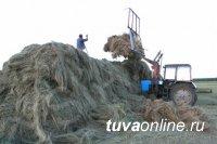 Тува: заявки на конкурс по заготовке кормов принимаются до 10 июля